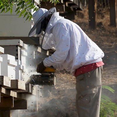 Working Hives In Grenada